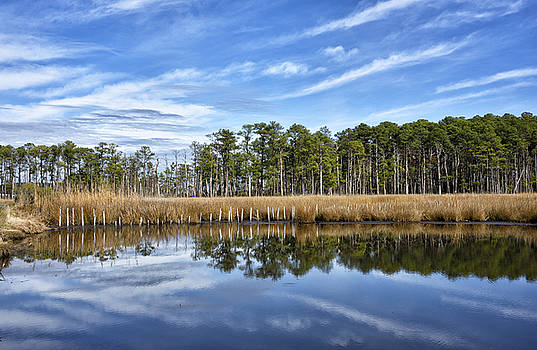 Blackwater National Wildlife Refuge - Maryland by Brendan Reals