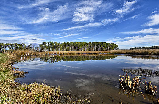 Blackwater Wildlife Refuge - Maryland by Brendan Reals