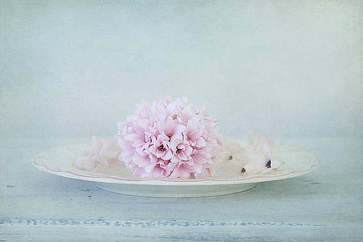 Blissful Hyacinth by Kim Hojnacki