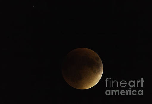 Blood Moon by Natural Focal Point Photography