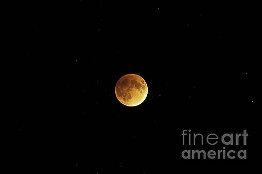 Blood Moon Rising by Natural Focal Point Photography