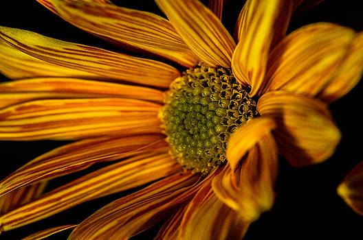 Bloom Bloom by Gerald Kloss