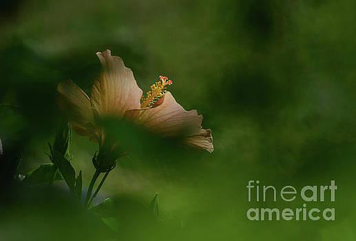 Bloom Through the Bush by Debby Pueschel