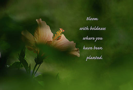 Bloom With Boldness by Debby Pueschel
