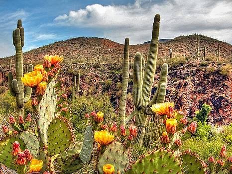 Bloomin' Cactus by Richard Gehlbach