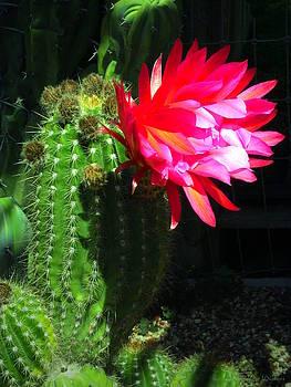 Joyce Dickens - Blooming Cactus