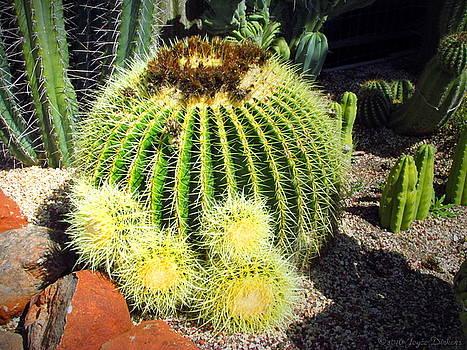 Joyce Dickens - Blooming Cactus Two