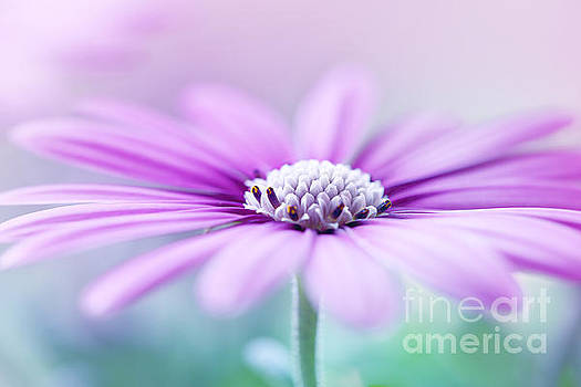 LHJB Photography - Blooming in purple