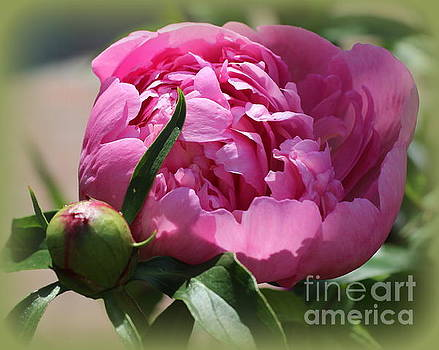 Blooming Pink Peony by Dora Sofia Caputo Photographic Art and Design