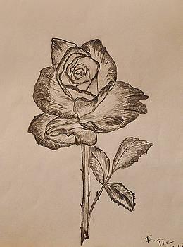Blooming Rose by Felicia Tica