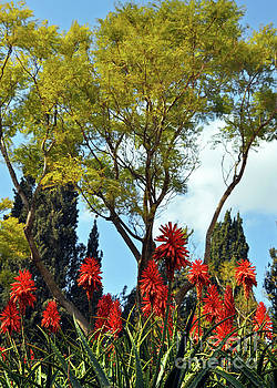 Blooms of Aloe Vera 3 by Lydia Holly