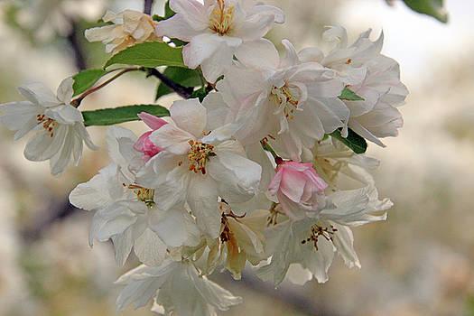 Carolyn Stagger Cokley - blossom
