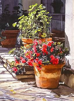 David Lloyd Glover - Blossom Niche