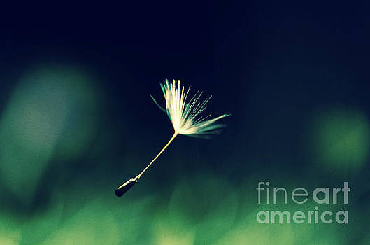 Blowing in the Wind Nature Photograph by Melissa Fague