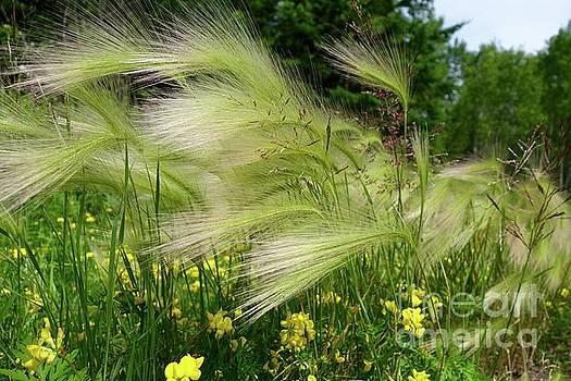 Blowing in the Wind by Sandra Updyke