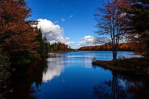 Blue Autumn by Alex Land