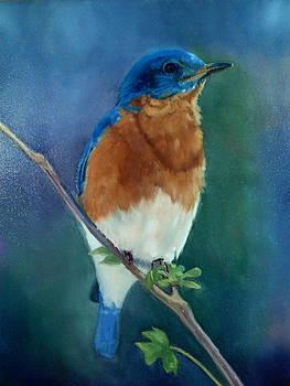 Blue Bird by Cynthia Vowell