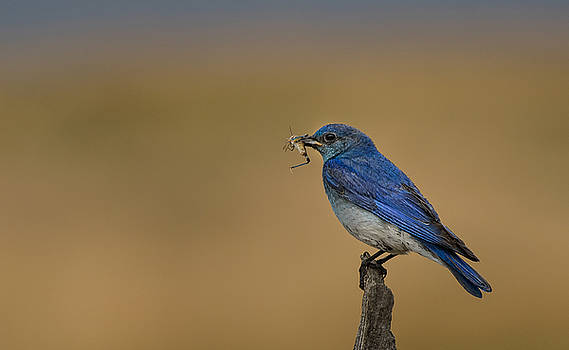 Blue Mountain Bird by Maik Tondeur
