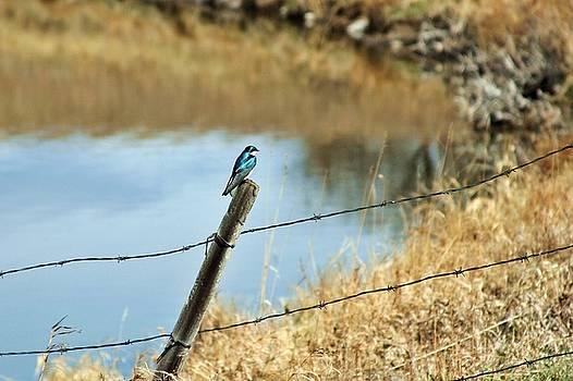 Blue Bird by Mario Brenes Simon