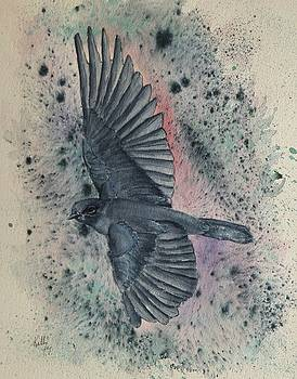 Blue Bird versus Bold Background by Kelly Mills