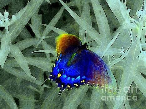 Blue butterfly green grass by Rrrose Pix