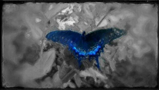 Blue butterfly in charcoal and vibrant aqua paint by MendyZ