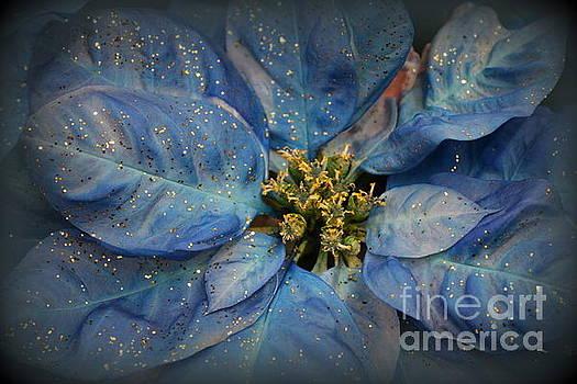 Blue Christmas Poinsettia by Dora Sofia Caputo Photographic Art and Design