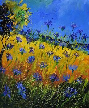 Blue cornflowers 561 by Pol Ledent