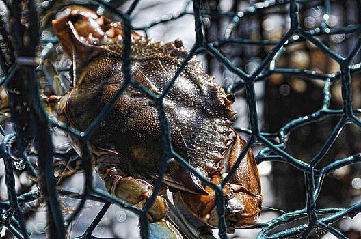 Blue Crab  by Jody Lovejoy