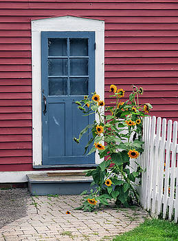 Blue Door and Sunflowers by Dave Mills
