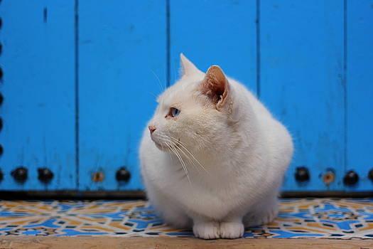Ramona Johnston - Blue Door White Cat