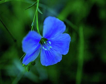 Blue Dreams 2 by Shiela Kowing