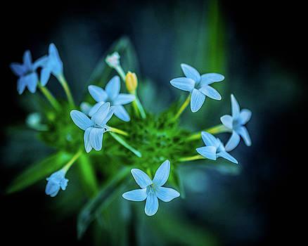 Blue Dreams by Shiela Kowing