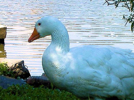 Blue Duck by Diane Ferguson