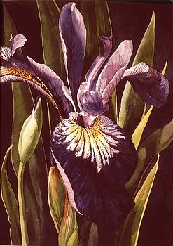 Alfred Ng - blue dutch iris