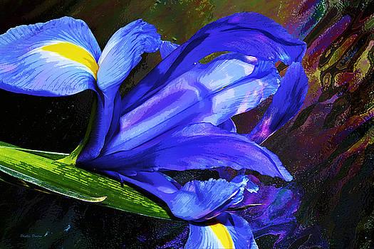 Blue Dutch Iris Painterly by Phyllis Denton