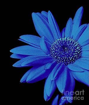 Blue by Elfriede Fulda