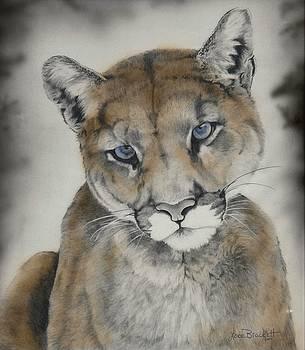 Blue Eyes by Lori Brackett
