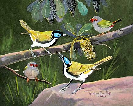 Blue Faced Honeyeaters and Red browed firetail finches by Audrey Russill