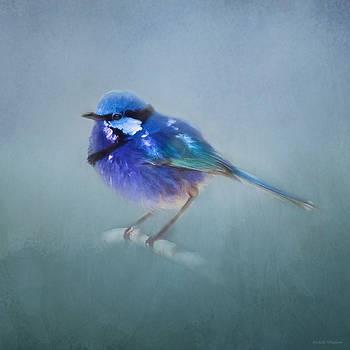 Michelle Wrighton - Blue Fairy Wren