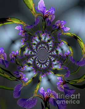 Blue Flag Iris Flower Abstract by Smilin Eyes  Treasures