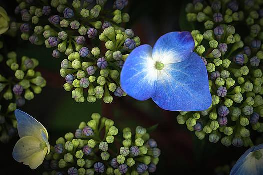 Blue Flower by Catherine Lau