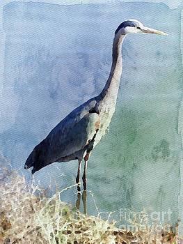 Blue Heron by Jacklyn Duryea Fraizer
