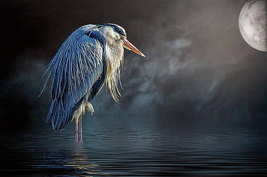 Blue Heron Moon by Brian Tarr