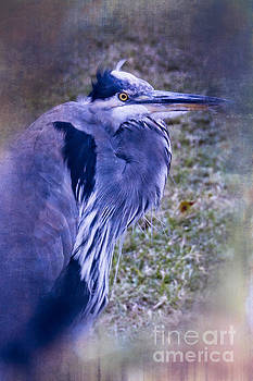 Blue Heron Portrait by Ella Kaye Dickey