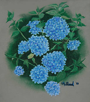 Blue Hibiscus by Charles Hubbard
