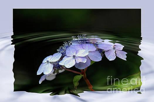Blue Hydrangea by Elaine Hunter