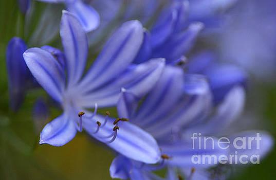 Blue In Bloom by Dan Holm