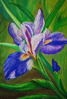 Blue Iris by Debbie Baker
