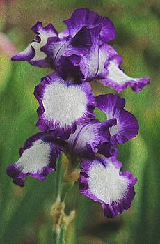 Blue iris by Jessica Nguyen